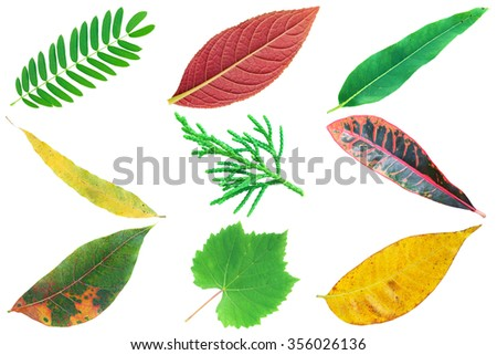 It is Collection of colorful various leaves isolated on white.