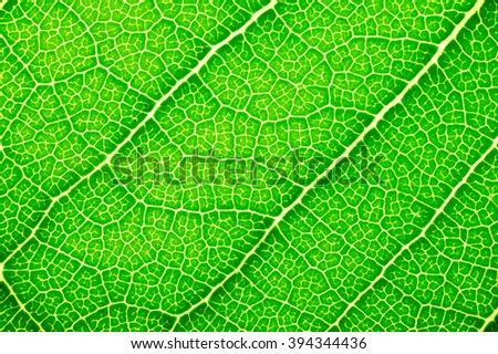 It is Design on leaf texture for pattern and background.  - stock photo