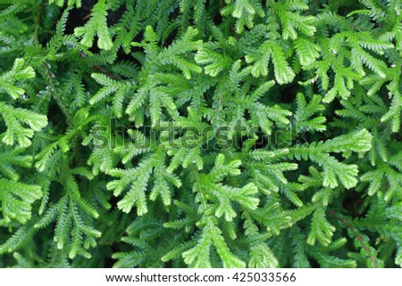 It is Green fern leaves background. - stock photo