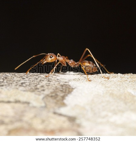 It is Orange ant for pattern. - stock photo