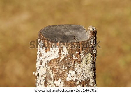 It is Single Tree stump for pattern. - stock photo