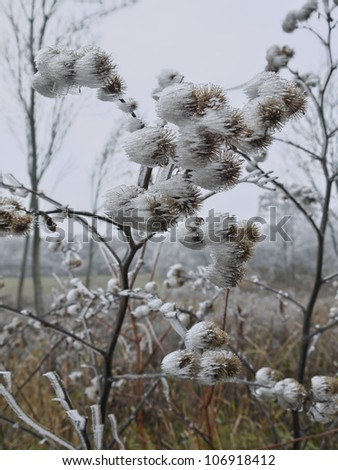 It's ice cold and windy outside. The photo was taken in winter 2011/2012 in Lower Austria. - stock photo