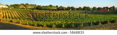 Italian vineyard landscape panoramic scene in the warm autumn, evening light - stock photo