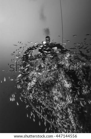 Italy, Calabria, Tyrrhenian sea, U.W. photo, wreck diving, sunken ship (Anthias school) - FILM SCAN - stock photo