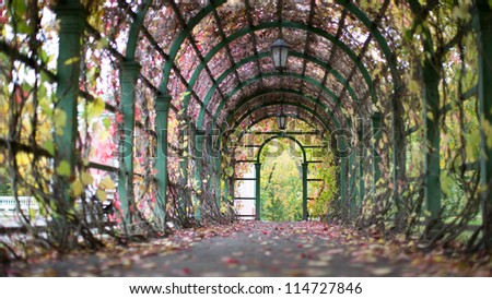 Ivy alley, focu on exit. - stock photo