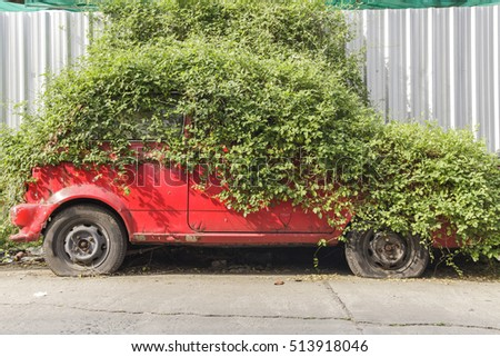 Ivy covered a car