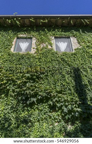 Ivy covered building