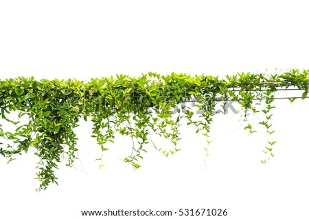 Hanging plants stock images royalty free images amp vectors shutterstock