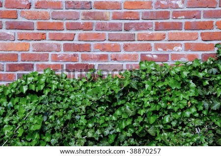 Ivy grows on brick wall, room for text, background - stock photo
