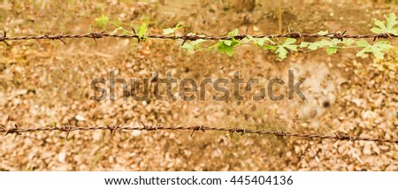 Ivy hiding the sharp spikes of barb wire blur background  - stock photo