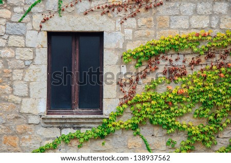 Ivy Leaves Grow Across the Wall by an Empty Window