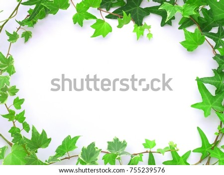 Ivy leaves on white background.
