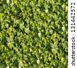 Ivy Seamless Tileable Texture. - stock photo