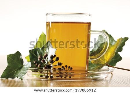 Ivy Tea (Hedera helix) - stock photo
