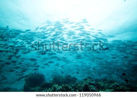 Jack fish - stock photo