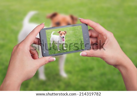 jack russel on green lawn - stock photo