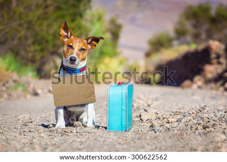 jack russell dog abandoned and left all alone on the road or street, with luggage bag or suitcase, begging to come home to owners, cardboard around neck - stock photo