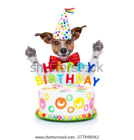 jack russell dog  as a surprise behind happy birthday cake with  candles ,wearing  red tie and party hat  , isolated on white background - stock photo