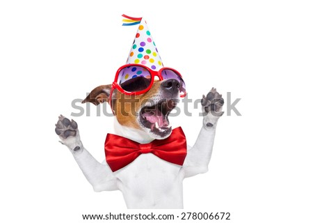 jack russell dog  as a surprise, singing birthday song  , wearing  red tie and party hat  , isolated on white background - stock photo