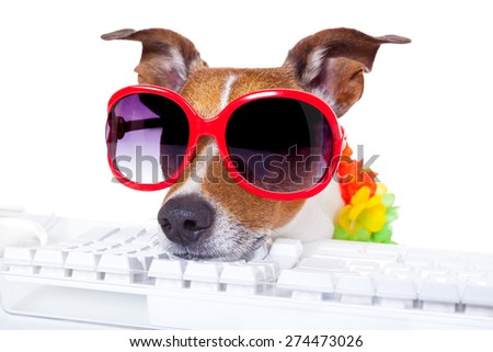 jack russell dog booking summer vacation holidays online using a pc computer keyboard, wearing sunglasses and a flower chain , isolated on white background