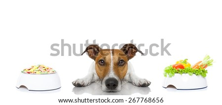 jack russell dog  has the choice between right healthy  and wrong unhealthy  food, isolated on white background