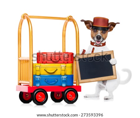 jack russell dog pushing a hotel Luggage Cart or trolley full of luggage and bags, ready to check in , in a pet friendly hotel, holding an empty blank blackboard , isolated on white background - stock photo