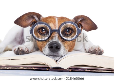 jack russell dog reading a book with nerd glasses, looking smart and intelligent, isolated on white background - stock photo