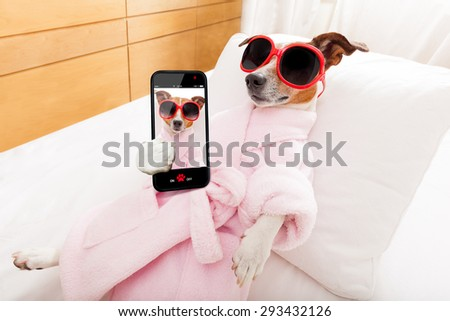 jack russell dog relaxing  and lying, in   spa wellness center ,wearing a  bathrobe and funny sunglasses, while making a selfie with smartphone - stock photo