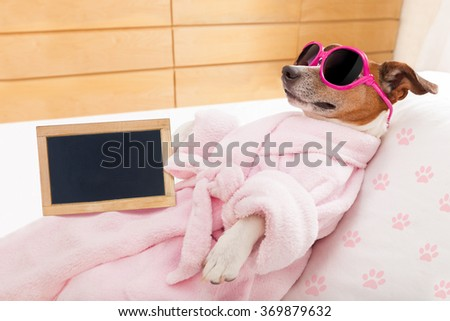 jack russell dog relaxing  and lying, in   spa wellness center ,wearing a  bathrobe and funny sunglasses and blackboard or placard as banner - stock photo