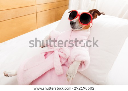 jack russell dog relaxing  and lying, in   spa wellness center ,wearing a bathrope and funny sunglasses - stock photo