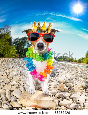 jack russell dog relaxing and resting on summer vacation holidays with flower chain , at the river shore, king crown on head