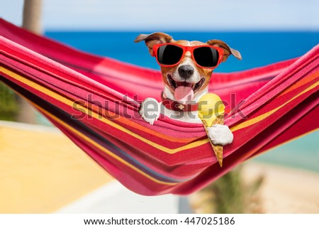 jack russell dog relaxing on a fancy red  hammock  or lounger  with  cold vanilla ice cream ,  on summer vacation holidays at the beach