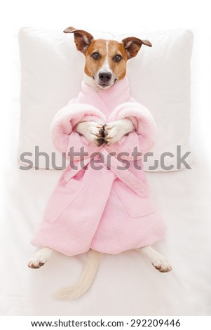 jack russell dog relaxing  with a prayer yoga pose with paws, in a spa wellness center, wearing a  bathrobe - stock photo