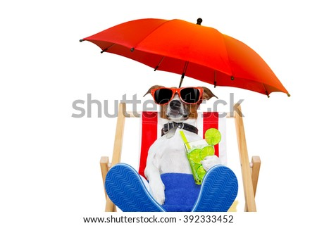 jack russell dog with caipirinha cocktail  on a beach chair with sunglasses under umbrella , isolated on white background