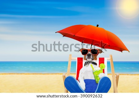 jack russell dog with caipirinha cocktail  on a beach chair with sunglasses under umbrella   on summer vacation holidays  - stock photo
