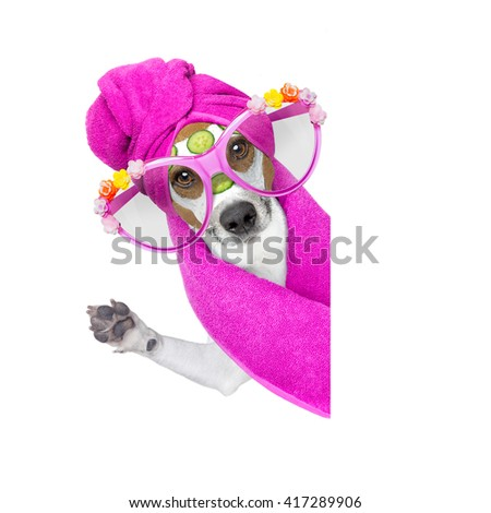 jack russell dog   with cucumber  mask in spa wellness beauty center  isolated on white background beside blank empty banner or placard
