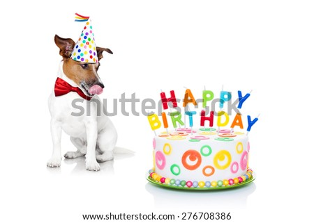jack russell dog  with licking  tongue and hungry for a happy birthday cake with candles ,wearing  red tie and party hat  , isolated on white background - stock photo