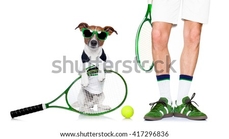 jack russell dog with owner as tennis player with ball and tennis racket or racquet isolated on white background - stock photo