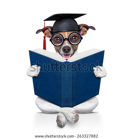 jack russell  graduated diploma dog sitting reading a big book, isolated on white background - stock photo