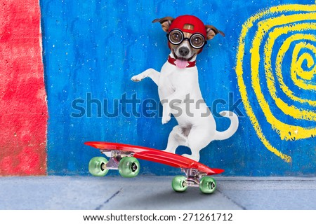 jack russell skater dog with red cap ready to play, balancing on red  skateboard, behind a wall with colors on the street outdoors - stock photo