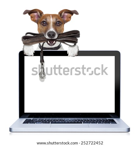 jack russell terrier dog waiting to go for a walk with owner, leather leash in mouth, behind pc computer screen , isolated on white background - stock photo