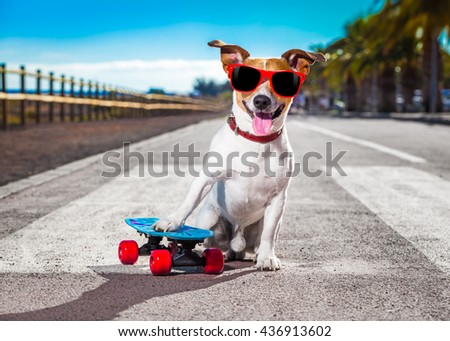 jack russell terrier dog  with  skateboard as skater , with sunglasses in summer vacation close to the beach - stock photo
