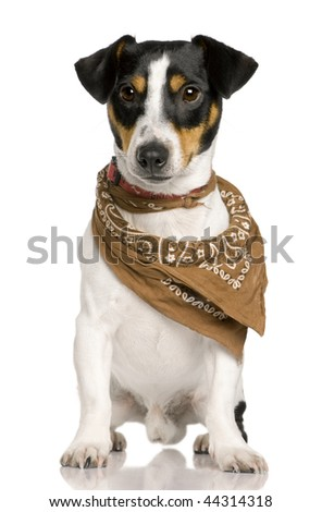 Jack Russell Terrier, 18 months old, wearing bandana in front of white background - stock photo