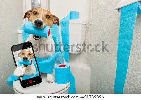 jack russell terrier, sitting on a toilet seat with digestion problems or constipation taking a selfie - stock photo