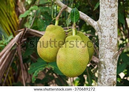 Jackfruit - stock photo