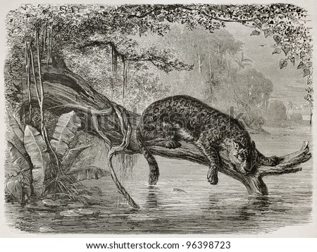 Jaguar fishing from a trunk growing over the river. Created by Riou and Laplante, published on Le Tour du Monde, Paris, 1867 - stock photo