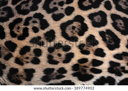 Jaguar fur texture background with beautiful spotted camouflage