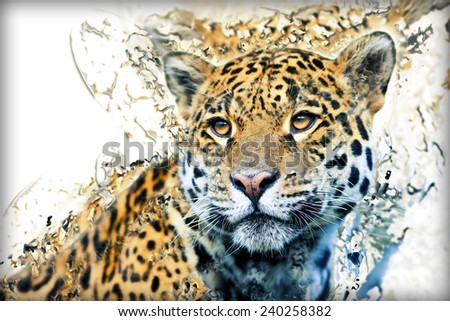 Jaguar illustration  - stock photo