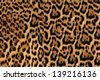 Jaguar, leopard and ocelot skin texture - stock photo