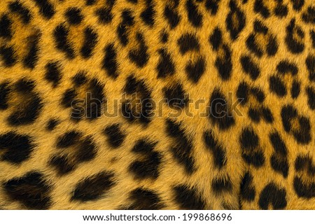 Jaguar, leopard and ocelot skin texture. - stock photo